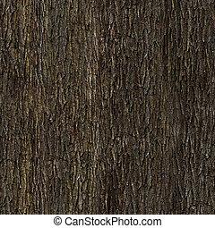 écorce, chêne, texture
