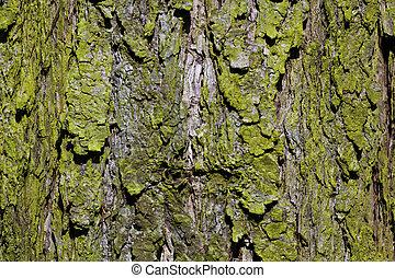 écorce, forêt arbre