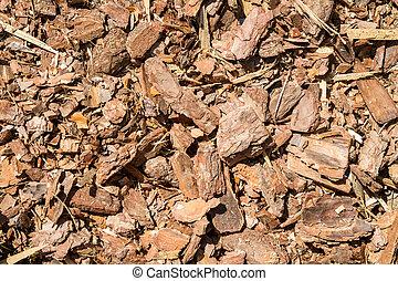 écorce, lambeau, forêt, fond