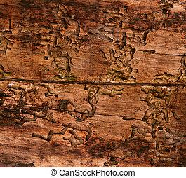 écorce, texture, vieux, bois, bois, fond, coléoptère