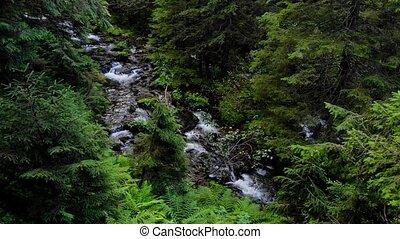 écoulement, rivière, forest., par