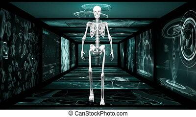 écran, animation, marche, squelette, couloir, humain, ...