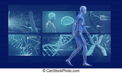 écrans, animation, modèle, marche, homme, balayage, humain, ...