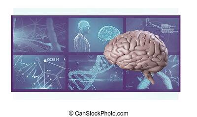 écrans, tourner, animation, cerveau, scientifique, 3d