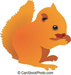 écureuil, petit