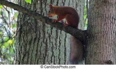 écureuil, sur, arbre, dans parc