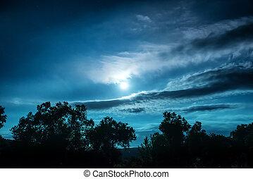 éjszaka, tele, erdő, hold
