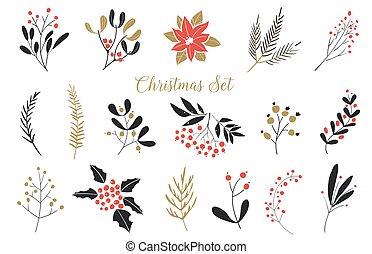 élégant, elements., dessiné, usines, conception, impeccable, ensemble, fleurs, set., main, feuilles, branches, graphique, noël, berries.