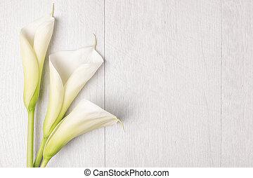 élégant, fleur source, lis calla