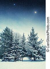 éléments, hiver, meublé, ceci,  na,  image, Parc, nuit