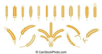éléments, organique, grains, logo, héraldique, seigle, isolé, ours, nourriture., formes, vecteur, orge, agricole, blé, ears., riz, ou