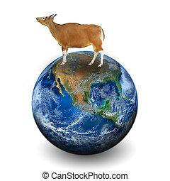 éléments, vache, meublé, ceci, image, nasa, la terre