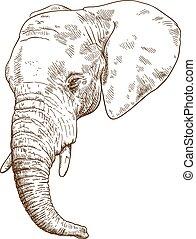 éléphant, dessin, gravure, illustration, tête