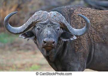 éléphant, et, zèbres, dans, les, etosha parc national,...