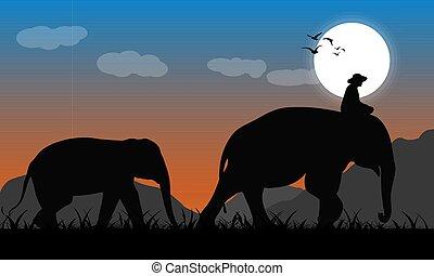 éléphant, lune, fond, forêt, lumière, image, vecteur, soir, silhouette, mahout, noir, marche, illustration, montagne