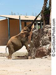 éléphant, parc, safari, une