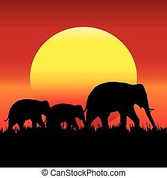 éléphant, silhouette, sunset.