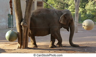éléphant, unique, zoo
