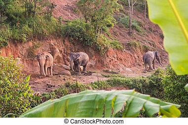 éléphants, famille, matin