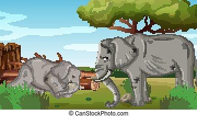éléphants, malade, parc, deux