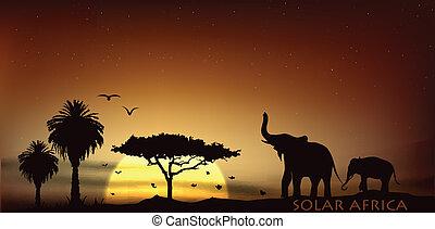 éléphants, savane, sur, arbres, africaine, levers de soleil
