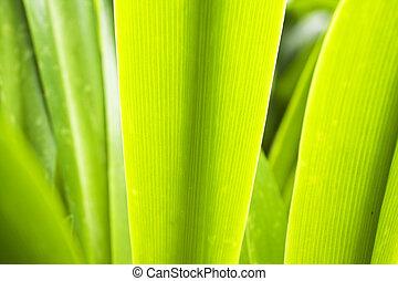 él, es, un, tiro, de, fresco, hierba verde