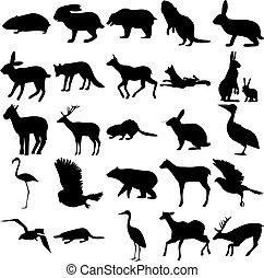 élan, lapin, hamster, cigogne, chèvre, flamant rose, castor, lièvre, hibou, 25, animals., renard, deer., ensemble, ornithorynque, pélican, ours, corneille, goshawk, peu