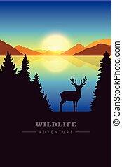 élan, vie sauvage, désert, lac, coucher soleil, aventure