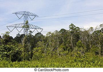électricité, brunei, jungle, pylône