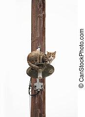 électricité, sur, pylône, errant, chat