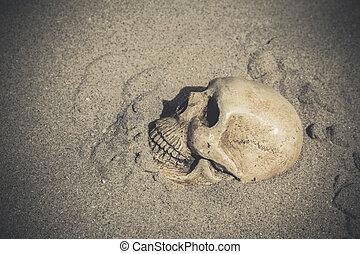 élet, mozdulatlan, koponya