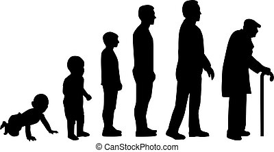 életciklus, fejlődés, -, alapján, csecsemő, fordíts, öregember
