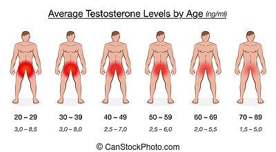 életkor, férfiak, diagram, testosterone, egyszintű