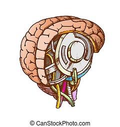 élevé, couleur, robotique, technologie, cerveau, vecteur