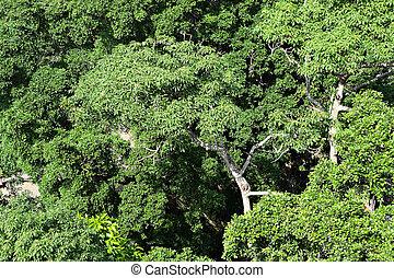 élevé, forêt, vue