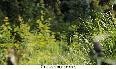 élevé, herbe, vert