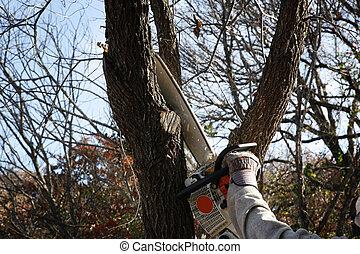 émondage, arbre