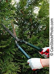 émondage, arbres