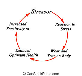 énfasis, ciclo