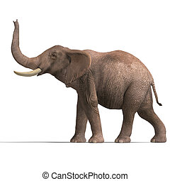 énorme, éléphant