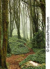 énorme, arbres, rochers, forêt verte, sentier