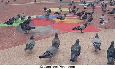 énorme, coup, square., ville, pigeons, 4k, troupeau