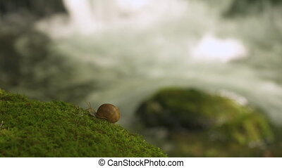 énorme, escargot, forêt, creeps, moss., raisin