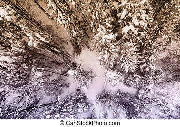 énorme, hiver, landcape, neigeux, sommet, arbres, vue