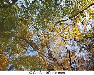énorme, inégal, reflet, trunks., arbres bruns, surface, eau, automne, vert, jaune, feuillage, puddle: