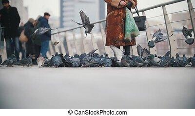 énorme, pigeons, manger, troupeau, bread.