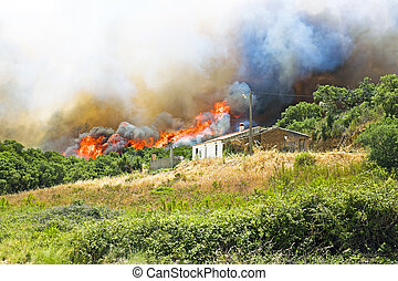 énorme, portugal, maisons, brûler, menace, forêt