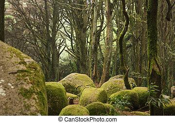 énorme, vert, forêt, Arbres, rochers