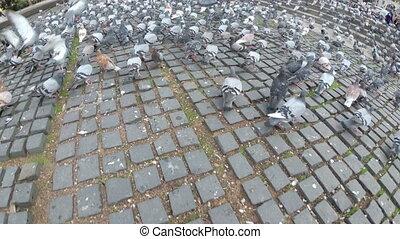 énorme, ville, sommet, rue, troupeau, pigeons, vue