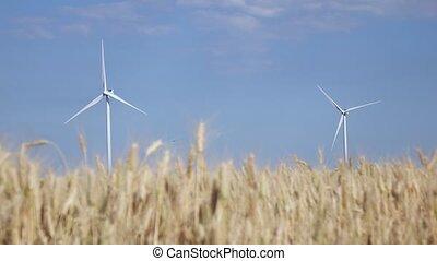éolienne, blé, deux, jeune, tourner, champ, mûrir